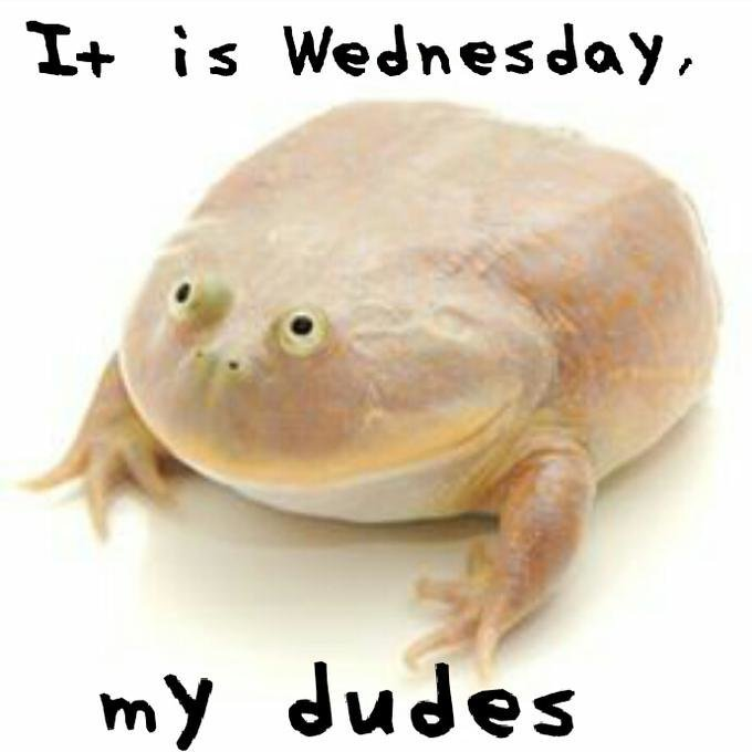 It is wednesday my dudes!